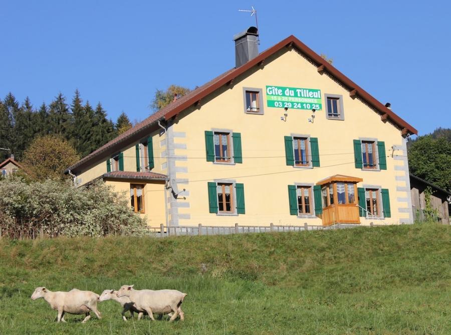 Gite Du Tilleul 10 à 31 Personnes Lorraine Vosges